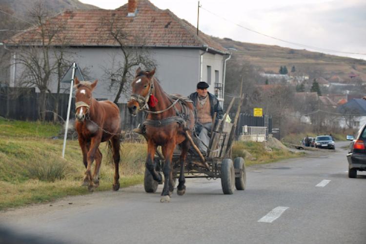 """O femeie din Florești s-a plâns de oamenii care nu strâng după caii lor. Răspunsul primit: """"Locuiți la țară, deci este normal"""""""