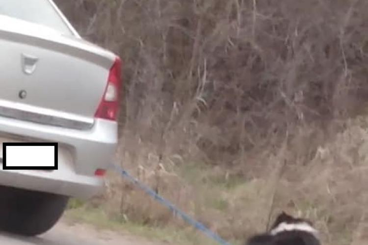 Câine legat și tras de mașină la Cluj. Se vede numărul mașinii, dar clipul a fost șters - FOTO