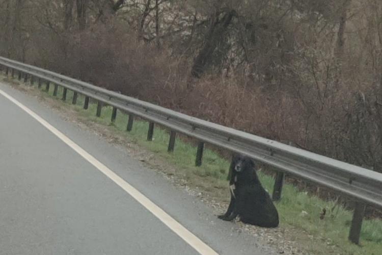 Devotament canin! Își așteaptă zilnic stăpânul mort într-un accident de circulație - FOTO