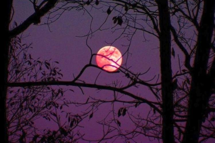 Luna Roz 2021. Până când mai poate fi văzut fenomenul astrologic?