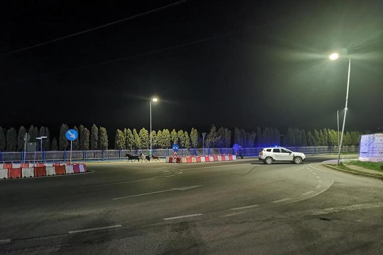 Florești: Cai pe Drumul Național, ghidați de polițiști. Jos pălăria - FOTO