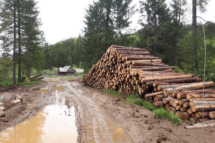 Directorul Parcului Natural Apuseni susține că pe Valea Ponorului nu se taie ilegal: Sunt doborâturi de la vijelii