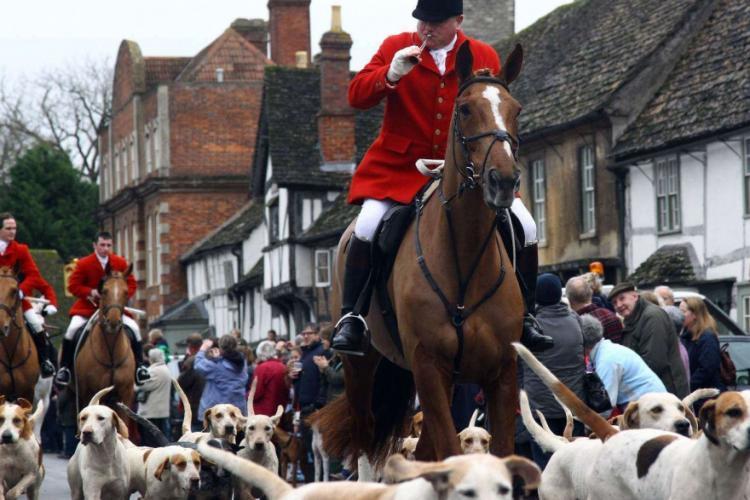 Animalele, recunoscute prin lege ca fiinţe cu drepturi în Marea Britanie