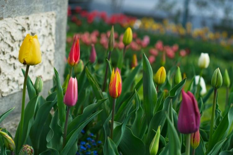 Grădina Botanică din Cluj e o feerie de culori! Probabil e cel mai frumos loc din Cluj-Napoca - FOTO