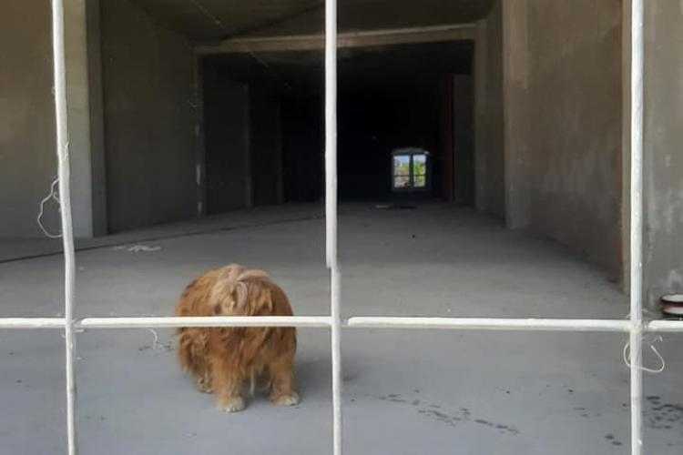 Prizonier pe nedrept în Cluj! Un suflet abandonat într-o închisoare de beton, privește cu ochii în lacrimi trecătorii ce se plimbă liberi