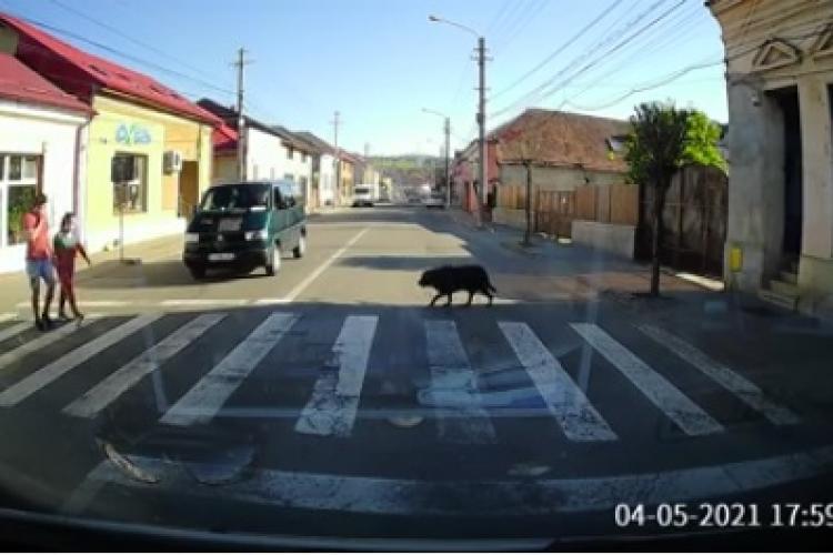 """Câinii dau lecții de educație oamenilor! """"Care-i om și care-i câine?"""" - VIDEO"""