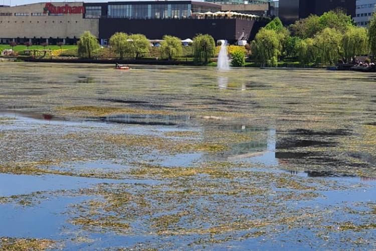 Clujenii acuză Primăria Cluj-Napoca de abandonarea lacului din Gheorgheni - FOTO