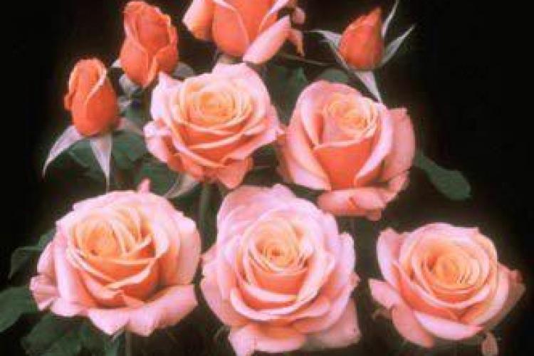 Florariile online estimeaza vanzari de 40.000 de euro de Valentine's Day