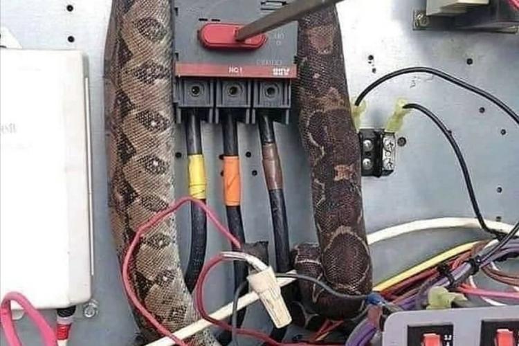 Glumă proastă a unui clujean. A pretins că un șarpe a lăsat o clădire din Cluj-Napoca fără curent - FOTO