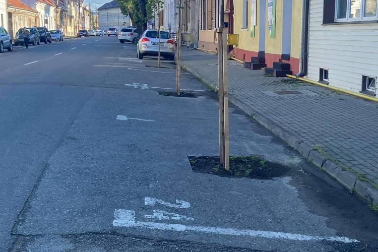 O altă zi în Alba Iulia! Au apărut copacii plantați pe locurile de parcare - FOTO
