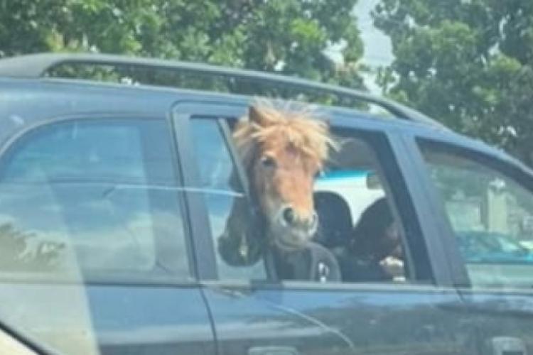 România nepieritoare! A înghesuit un cal în mașină, cu doi copii pe banchetă - VIDEO
