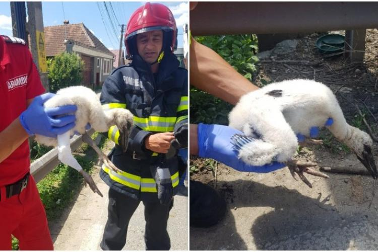 Un pui de barză a fost salvat de pompieri după ce a căzut din cuib - FOTO