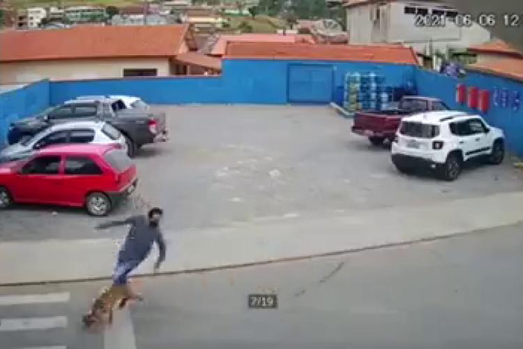 Un câine a lovit un bărbat pe trecerea de pietoni. Filmare LIVE - VIDEO