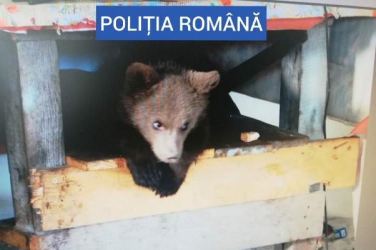 Un bărbat din Maramureș este cercetat penal pentru deținerea în captivitate a unui pui de urs - VIDEO