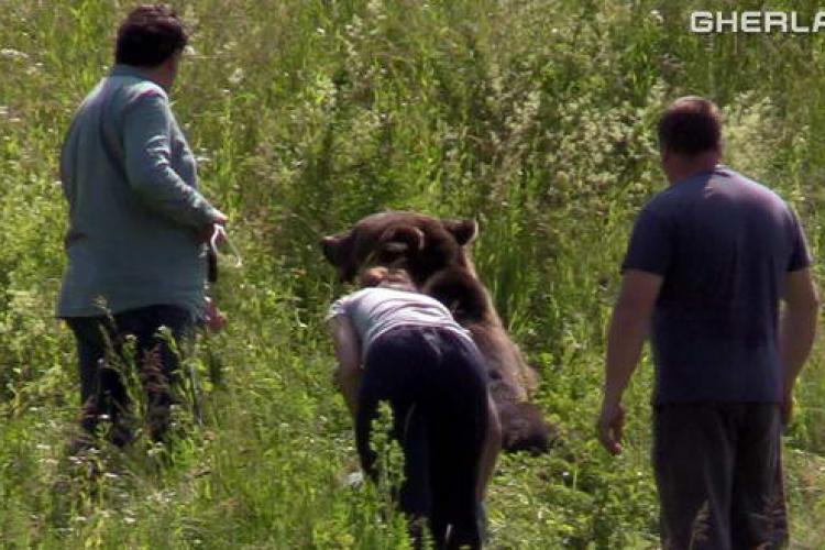 Urs de un sfert de tonă, lovit de o mașină la Cluj! Din păcate s-a luat decizia eutanasierii - VIDEO