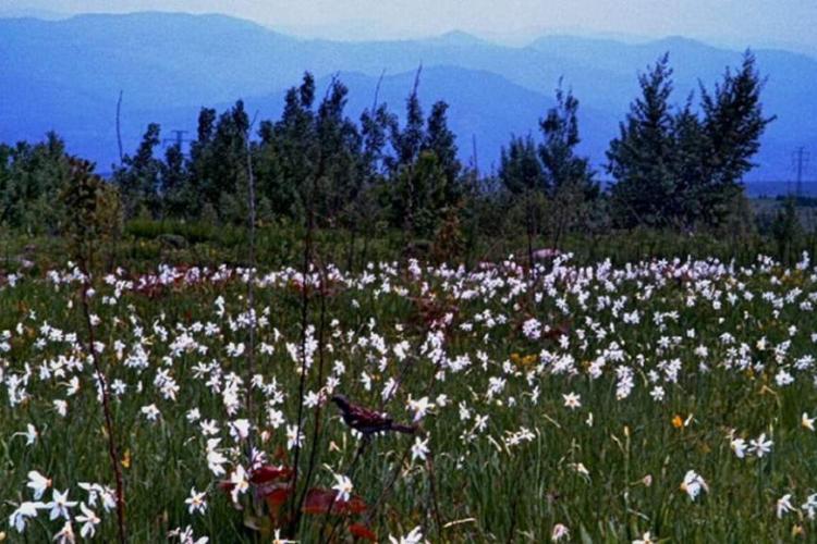 Feerie în Retezat. A început luna florilor la munte - VIDEO