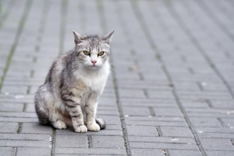 Cluj: Un bărbat a fost acuzat de furt după ce a salvat o pisică