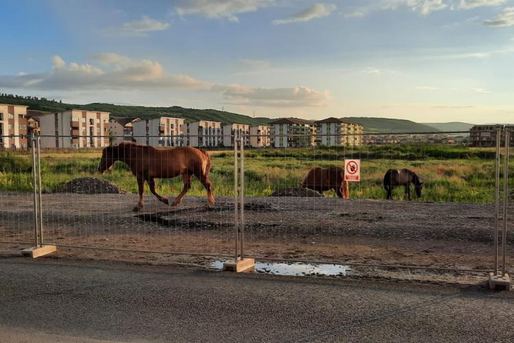 Florești: Gardul de pe Eroilor, folosit drept țarc pentru cai - FOTO