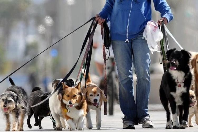 Taxe noi pentru români! Și cei care plimbă câini vor plăti taxe la stat