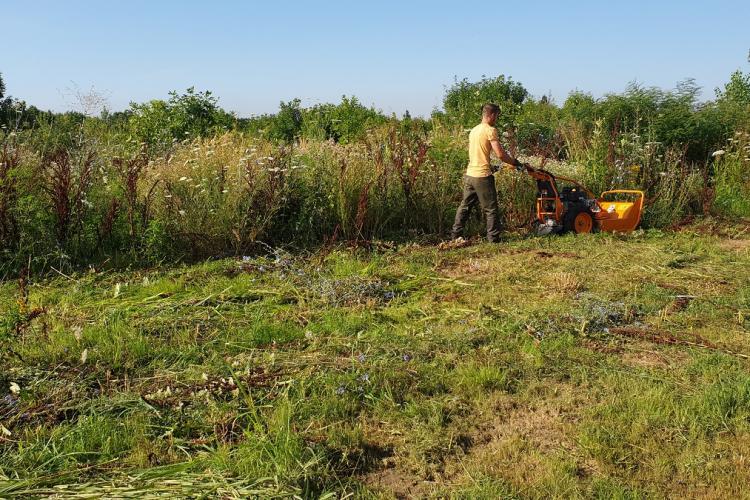 Primăria Cluj-Napoca supraimpozitează terenurile care nu sunt întreținute și pe care vegetația crește