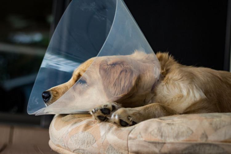 Peste 150 de câini și pisici, sterilizate gratuit, într-un sat din Mureș, de voluntarii unei asociații