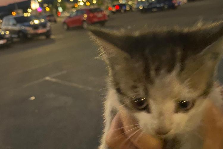 Pompierii au REFUZAT sa salveze un pui de pisică din parcare VIVO. Trecătorii nu au fost indiferenți - FOTO