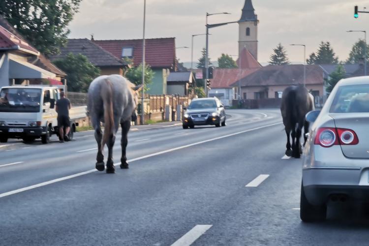 Caii din Florești ar urma să dispară din localitate, dar e nevoie de o soluție finală