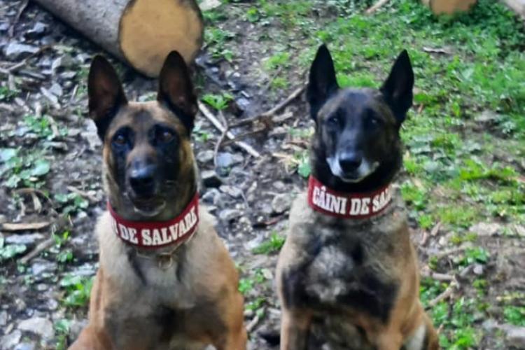 Doi câini din cadrul Salvamont au găsit cadavrul unui bătrân care era dat dispărut