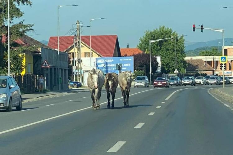 Caii din Florești au ieșit la