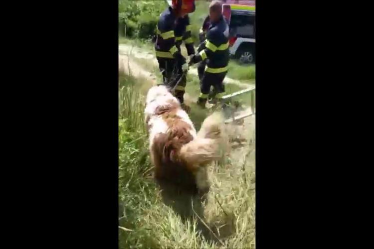 Câine salvat la Dej dintr-un canal neacoperit. Pompierii l-au scos și l-au eliberat - VIDEO