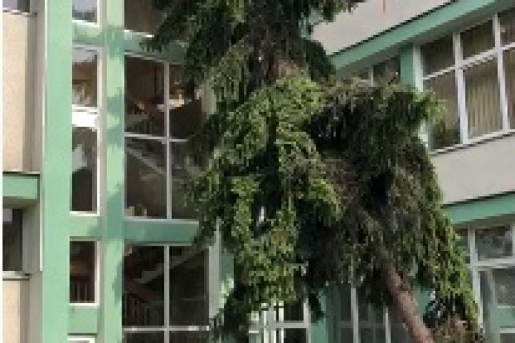 """Cluj: Arbore căzut în curtea Liceului Pedagogic """"Gheorghe Lazăr"""" în urma furtunii de duminică - VIDEO"""