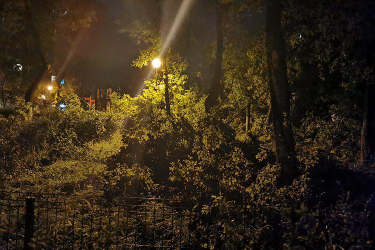 Furtuna de duminică seara a rupt copacii, ca niște scobitori, în Gheorgheni. Sunt mașini avariate - FOTO