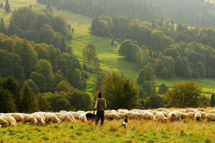 """Încă un cioban găsit sfâșiat de urs. Apel disperat al fiului său: """"Îi lasă să ne omoare chiar pe toți? Să ne termine?"""