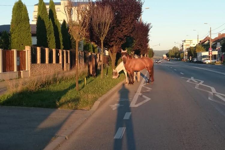 Doi cai pășteau liniștiți pe strada Corneliu Coposu, în orașul de cinci stele - FOTO
