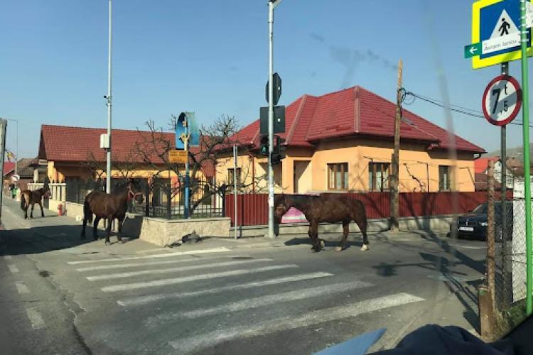 """Bogdan Pivariu pune punctul pe """"i"""": Nu putem să lăsăm caii pe stradă, dar să discutăm de digitalizare și modernizare"""