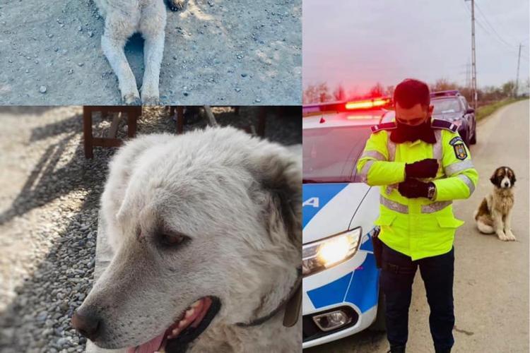 Cel mai inimos polițist din Cluj! Agentul Hoza salvează acum un cățel la Bonțida. Nu e primul suflet pe care îl salvează - FOTO