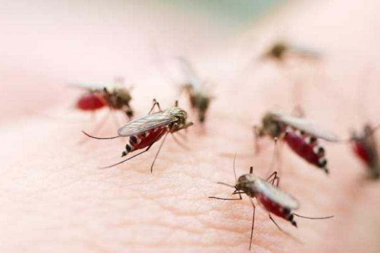 Dezinsecție pe domeniul public din Cluj-Napoca pentru combaterea țânțarilor
