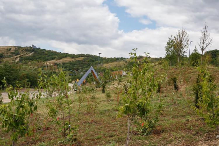 """Parcul """"Pădurea Clujenilor"""" e aproape de finalizare. Va avea tiroliană și o suprafață impresionantă - FOTO"""