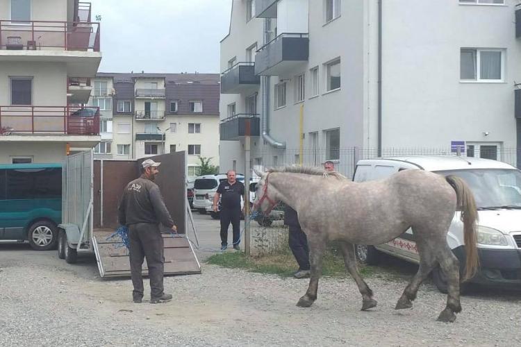 Pivariu e pus pe treabă! Primii cai abandonați în Florești au fost confiscați - FOTO