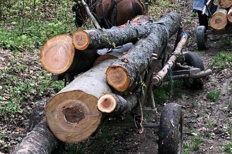 Tăierile ilegale de lemne continuă! Doi bărbați sunt cercetați penal
