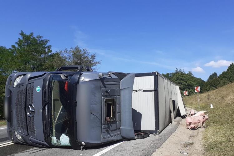 Trafic îngreunat în localitatea Bucea, după ce un autocamion care transporta animale s-a răsturnat - FOTO