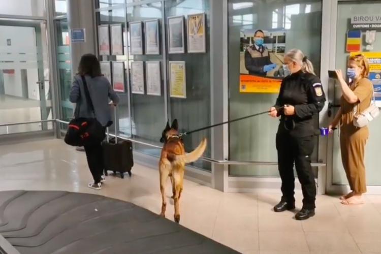 Câinii antrenați să detecteze COVID-ul vor fi trimiși și pe Aeroportul Internațional din Cluj-Napoca