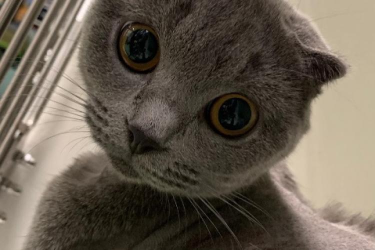 Premieră în România: Anomalie congenitală rară la pisici, operată cu succes la USAMV Cluj-Napoca - FOTO