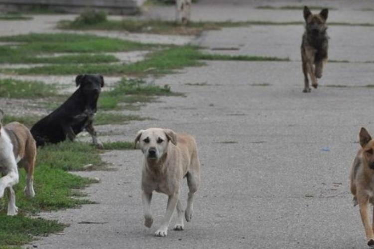 Toți câinii fără stăpân vor fi ridicați de pe raza comunei Feleacu. Cetățenii sunt rugați să nu-și lase patrupezii pe străzi