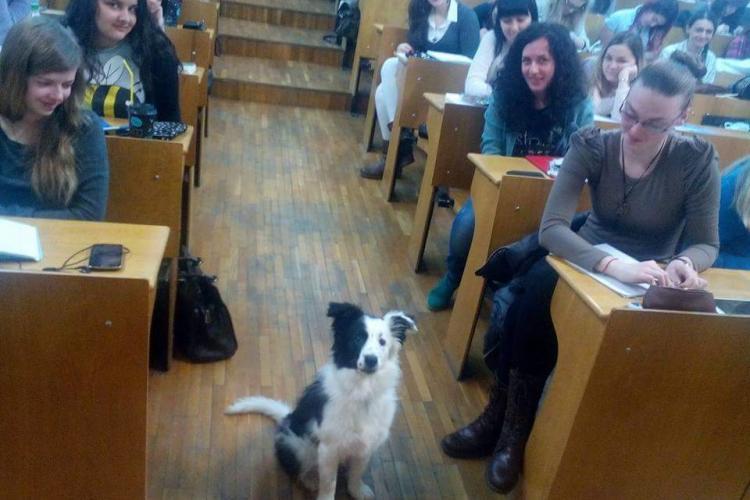 Roy, prima studentă patrupedă de la UBB Cluj - FOTO