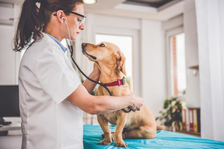 Campanie de sterilizare gratuită a câinilor din Florești