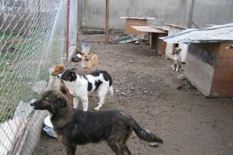 "Paznicii au furat hrana cainilor de la adapostul ""Trei Frati Patati"" din Turda! - FOTO"