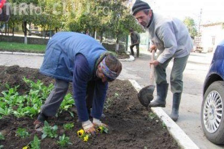 Un milion de euro vrea Primaria Cluj Napoca sa cheltuiasca pe flori in 2011