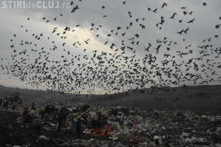 Alin Tise: Sanse mici sa obtinem finantarea europeana pentru inchiderea gropii de gunoi de la Pata Rat
