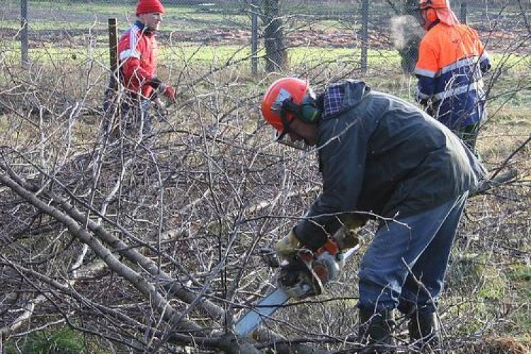 Austriecii cauta 200 de muncitori in silvicultura